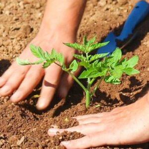 Για καλλιέργεια στο σπίτι